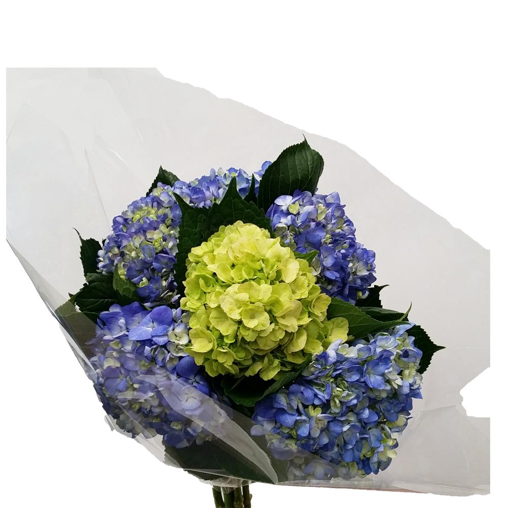 CB6 HYDRANGEA BLUE & GREEN